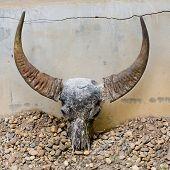 stock photo of bull head  - Closeup decoration design of head skull of bull - JPG