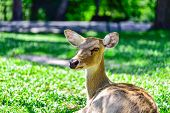 stock photo of antlers  - The Deer  - JPG