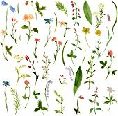 picture of weed  - Set of watercolor drawing herbs and flowers - JPG