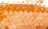 picture of honeycomb  - natural honeycombs from wax with honey honeycomb background - JPG