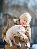 picture of piglet  - happy woman holding a newborn piglet for domestic animal breeding - JPG