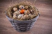 picture of quail egg  - The wood basket filled with eggs and one orange egg of quails on wooden background - JPG