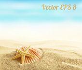 foto of starfish  - Shell and starfish on sandy beach vector illustration EPS 8 - JPG
