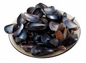 pic of mollusca  - Shells of mussels on glass plate - JPG