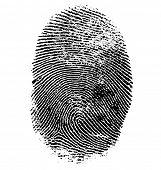 picture of fingerprint  - Vector illustration of fingerprint isolated on white - JPG