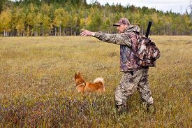 foto of laika  - autumn hunting with dog on the swamp  - JPG