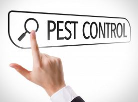 image of pest control  - Pest Control written in search bar on virtual screen - JPG