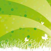 Green grass in the light
