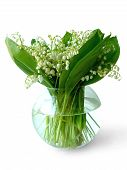 Lily Of The Valle