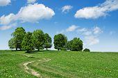 estrada e a árvore no campo verde