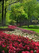 Voorjaar In Central Park