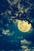 Постер, плакат: Silhouette Of The Branches Of Trees Against The Night Sky In A Moon Outdoors