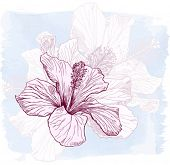 Hibiscus flowers & watercolor background. Elements on separate layers
