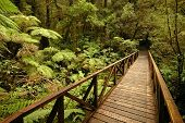 pic of nea  - One of the wooden bridges on the walkway around the Cauldron Falls nea Milford Sound New Zealand - JPG