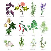 Eating Herbs And Spices. Healthy Organic Food And Different Herbs And Flowers Valerian Rose Pharmace poster
