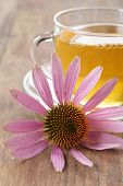 Echinacea purpurea flower against the cup of herbal tea