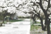 Spring Blurry City. Defocused Cityscape Background. Blurry Blossom Background, poster