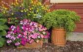 foto of lobelia  - Planters used in the summer garden filled with impatiens - JPG