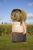 Big scale fall decoration  of a scarecrow on a corn farm using haybales to form a female figure.