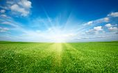 stock photo of sun rays  - Sunset sun and field of green fresh grass under blue sky - JPG