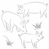 Sketch Of Pig. Drawing Pig And Pork. Pig Symbol, Logo, Icon, Con poster