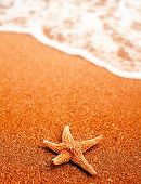Seastar On The Sand Of The Beach And Coming Wave A Lot Of Copyspace, Nobody Around, Travel Or Holida poster