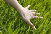 cerca de la mano de una mujer tocando la hierba, la