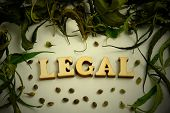 The Word Legal Is Lined With Wooden Letters In The Center Of The Frame From The Leaves Of Marijuana  poster