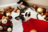 Cute Kitty Sitting In Box With Red And Gold Baubles, Ornaments And Santa Hat Under Christmas Tree In poster