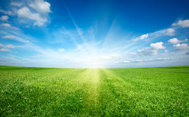 picture of sun rays  - Sunset sun and field of green fresh grass under blue sky - JPG