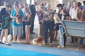 Samara,russia-august 26:russian National Dogs Exhibition Of All Breeds ,on August 26,2012 In Samara,
