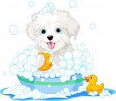 White fluffy dog having a soapy bath