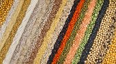 colorful striped rows of dry lentils, soya beans, grain , peas, groats , buckwheat, soybeans, legume