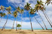 Palm trees on beach at Moorea island