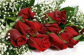 foto of one dozen roses  - A dozen long stem roses for valentines day - JPG