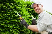 stock photo of prunes  - Portrait of an happy gardener pruning an hedge - JPG
