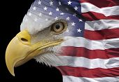 stock photo of combine  - A bald eagle combined with the flag of the United States - JPG