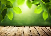 stock photo of leafy  - summer background with wooden surface - JPG