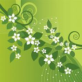 stock photo of jasmine  - Beautiful jasmine flowers and green swirls on green background - JPG