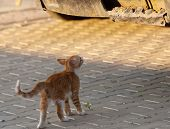 foto of curio  - Red curios little kitten play on sunny day on summer - JPG