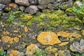 Rough Rocky Terrain Abstract Moss Background