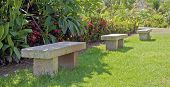 Tropical Garden Row of Stone Seating And A Lizard