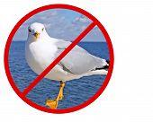No Seagulls