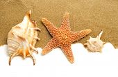 some conch shells and a starfish on the sand, on a white background with a blank space to write your