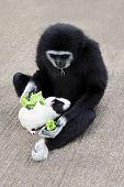 Monkey Feeding Guineapig