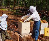 Beekeepers Tending Hive