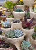 picture of planters  - Succulents plants potted in decorative ceramic planter pot - JPG