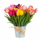 foto of purple white  - Bunch  of spring  tulips flowers in metal pot   isolated on white background - JPG