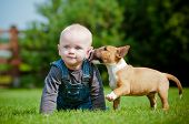foto of baby dog  - small boy playing with a bull terrier puppy