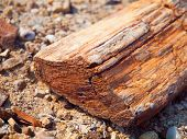 A Piece Of Petrified Wood
